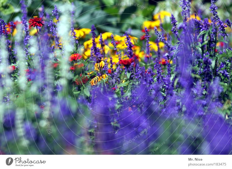 Nature Flower Blue Plant Summer Yellow Autumn Spring Park Environment Violet Seasons Summery
