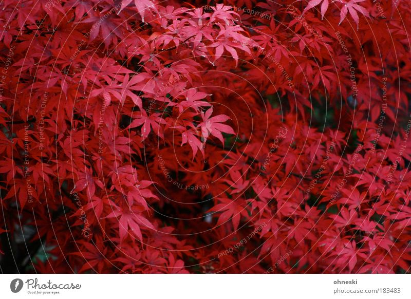 red october Colour photo Exterior shot Aerial photograph Pattern Day Bird's-eye view Environment Nature Plant Autumn Tree Leaf Red Redness