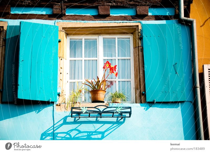 Blue made Trip Summer vacation Alsace Colmar House (Residential Structure) Dream house Sun Sunlight Beautiful weather Plant Flower Pot plant Small Town Old town