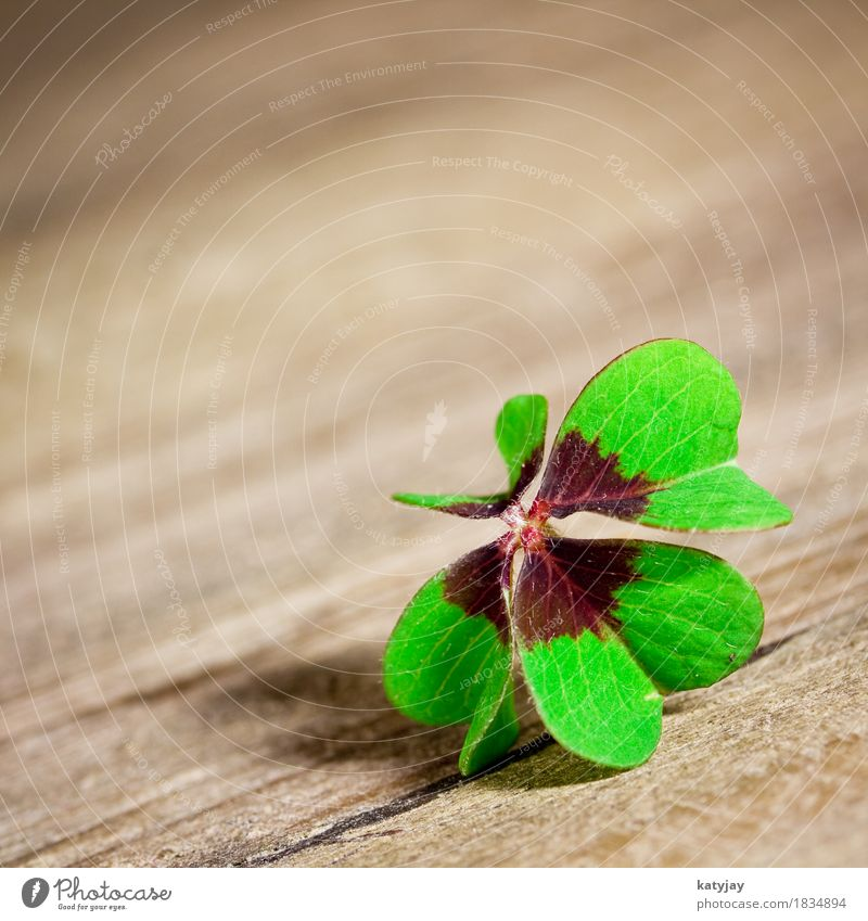 shamrock Clover Cloverleaf Happy Four-leafed clover Wood Table macro Wooden table Green Leaf leaves Four-leaved New Year New Year's Eve congratulations Birthday