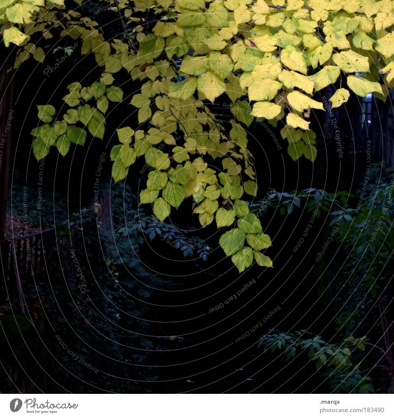 darkness Colour photo Exterior shot Deserted Copy Space bottom Twilight Trip Nature Autumn Plant Tree Bushes Faded Dark Yellow Black Fear Cold