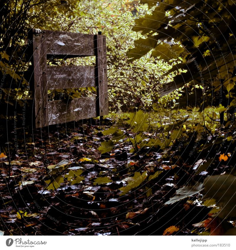 hannibal ante portas Colour photo Subdued colour Exterior shot Deserted Day Light Shadow Environment Nature Landscape Plant Autumn Bushes Leaf Foliage plant