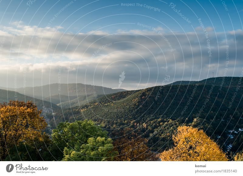 Palatinate Forest in beautiful Vacation & Travel Tourism Trip Adventure Far-off places Freedom Mountain Hiking Environment Nature Landscape Plant Sky Clouds
