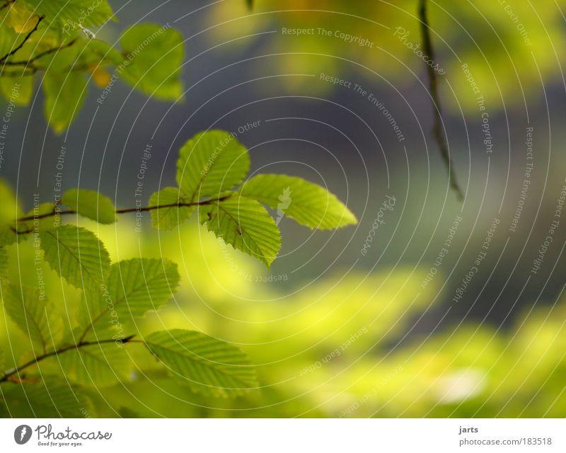 Nature Green Beautiful Tree Plant Summer Colour Leaf Calm Landscape Autumn Park Contentment Climate Natural Fresh