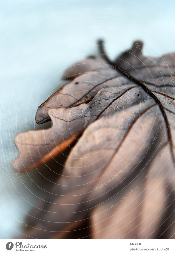 Nature Leaf Cold Environment Sadness Autumn Brown Park Weather Dirty Gloomy Transience Broken Dry Decline Climate change