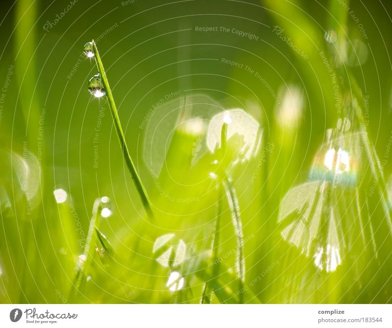 In the morning dew Well-being Senses Calm Plant Grass Green Blade of grass Drops of water Dew Considerable Pure Purity Spa Relaxation Natural Colour photo