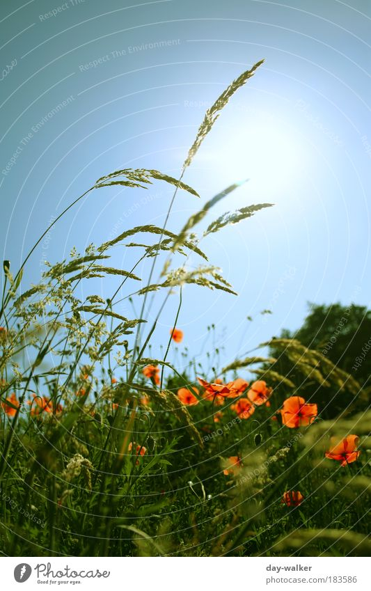 Nature Sky Tree Sun Flower Green Blue Plant Red Meadow Blossom Grass Spring Exterior shot Colour photo Warmth