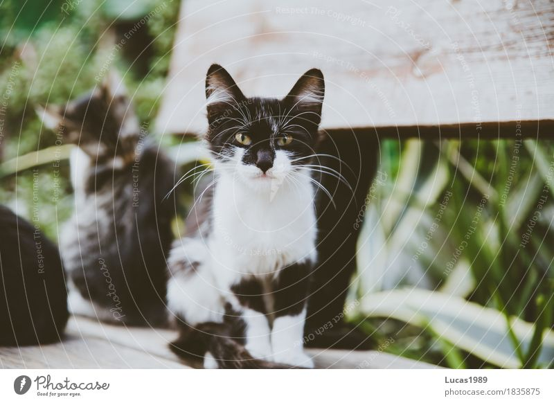 Angry Cat Cyprus Animal Pet Wild animal 1 2 3 Group of animals Pair of animals Animal family Observe Looking Aggression Exceptional Threat Brash Astute Green