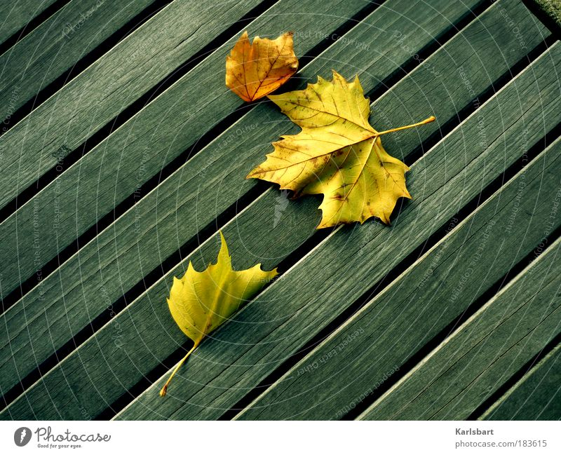 Nature Beautiful Vacation & Travel Calm Leaf Life Relaxation Autumn Movement Garden Wood Line Contentment Power Design 3
