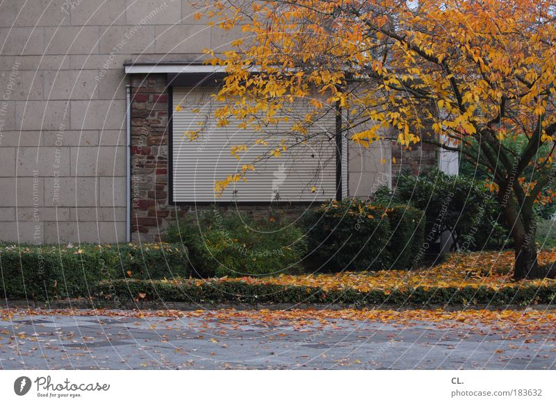 autumn09 Environment Nature Autumn Weather Wind Leaf Meadow House (Residential Structure) Wall (barrier) Wall (building) Window Street Living or residing Safety