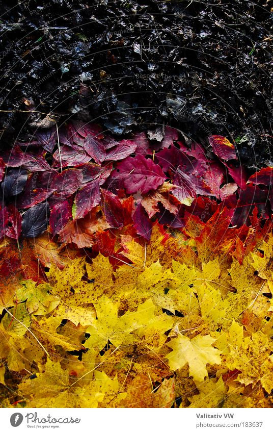 Nature Red Leaf Black Yellow Colour Autumn Human being Contrast Germany Environment Gold Future Flag German Flag Ensign