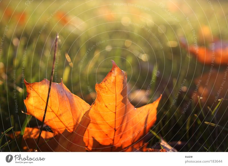Nature Old Sky Plant Leaf Meadow Autumn Emotions Landscape Environment Gold Time Esthetic Lie Seasons Beautiful weather