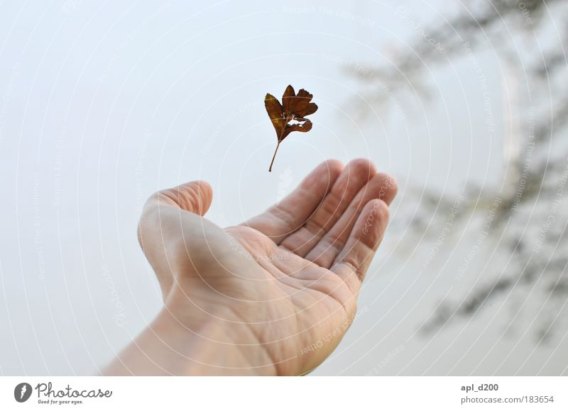 Catch Me If You Can Human being Masculine Young man Youth (Young adults) Arm Hand 1 18 - 30 years Adults Environment Nature Autumn Winter Leaf To fall Esthetic