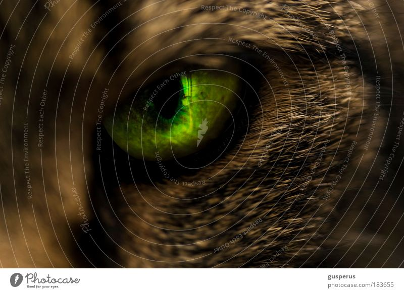 {slit} eye Colour photo Macro (Extreme close-up) Copy Space bottom Artificial light Shallow depth of field Animal portrait Looking Looking into the camera Cat