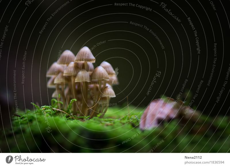 peer pressure Environment Nature Plant Elements Earth Autumn Moss Park Forest Wet Acceptance Protection Safety (feeling of) Agreed Together Mushroom