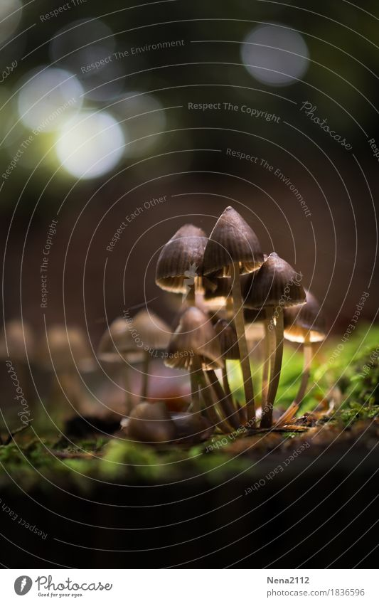 mushroom colony Environment Nature Earth Autumn Weather Beautiful weather Plant Moss Garden Park Forest Virgin forest Infinity Wild Mushroom Grouped