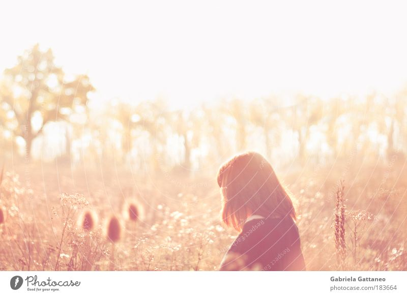 Human being Nature Autumn Meadow Feminine Emotions Happy Contentment Bright Moody Glittering Pink Gold Free Bushes Warm-heartedness
