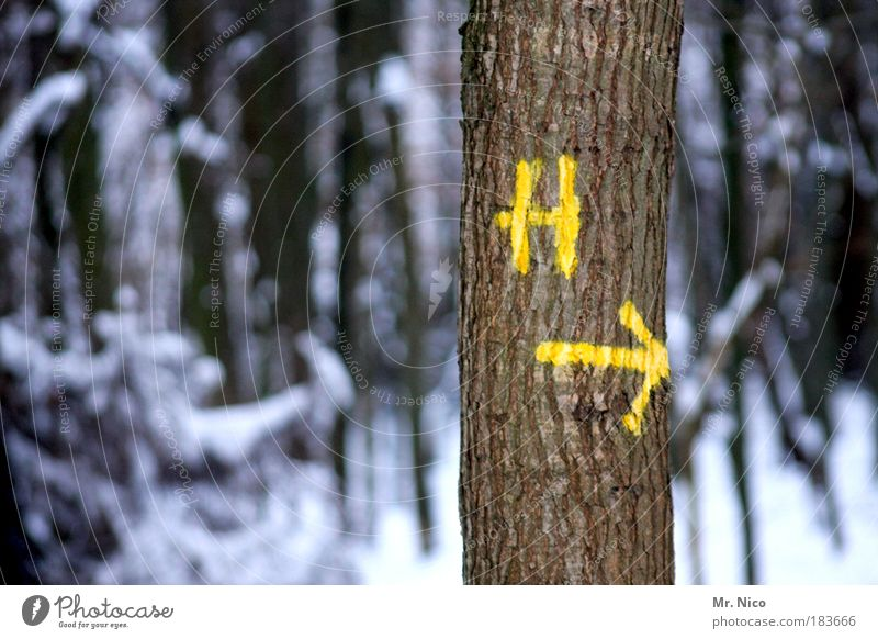 Nature Tree Winter Loneliness Yellow Forest Cold Snow Wood Landscape Ice Weather Environment Frost Climate Sign
