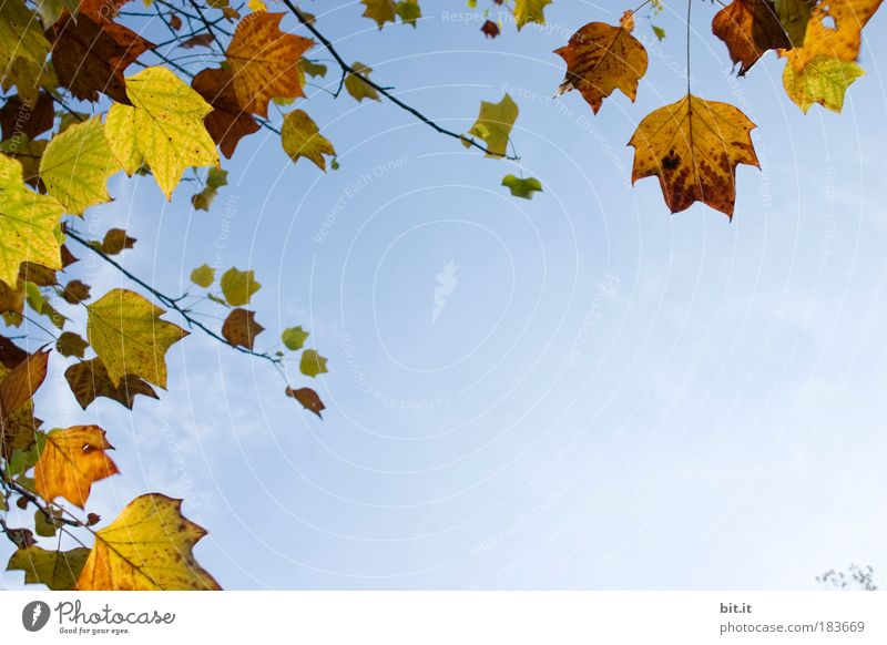Nature Plant Leaf Calm Clouds Yellow Autumn Brown Park Gold Wind Beautiful weather Serene Cloudless sky Gale Hang