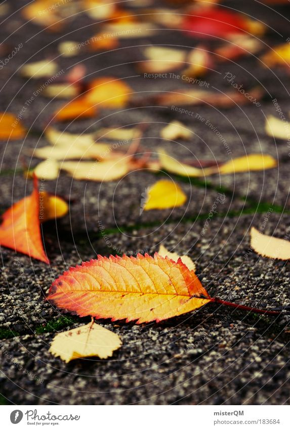 Nature Red Leaf Yellow Autumn Park Contentment Perspective Esthetic Romance Vantage point To go for a walk Ground Lie Under Sidewalk