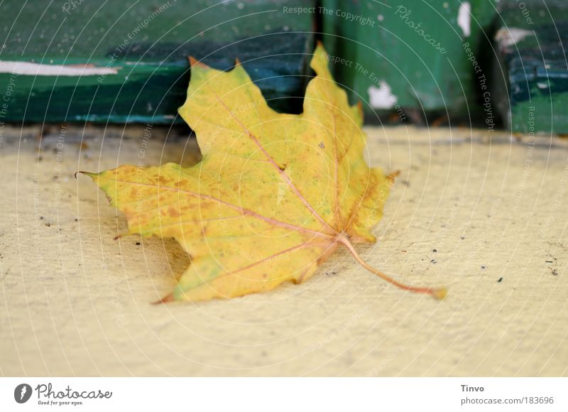 window seat Colour photo Exterior shot Deserted Day Shallow depth of field Autumn Leaf Old Lie To dry up Yellow Green Emotions Transience Change Autumn leaves