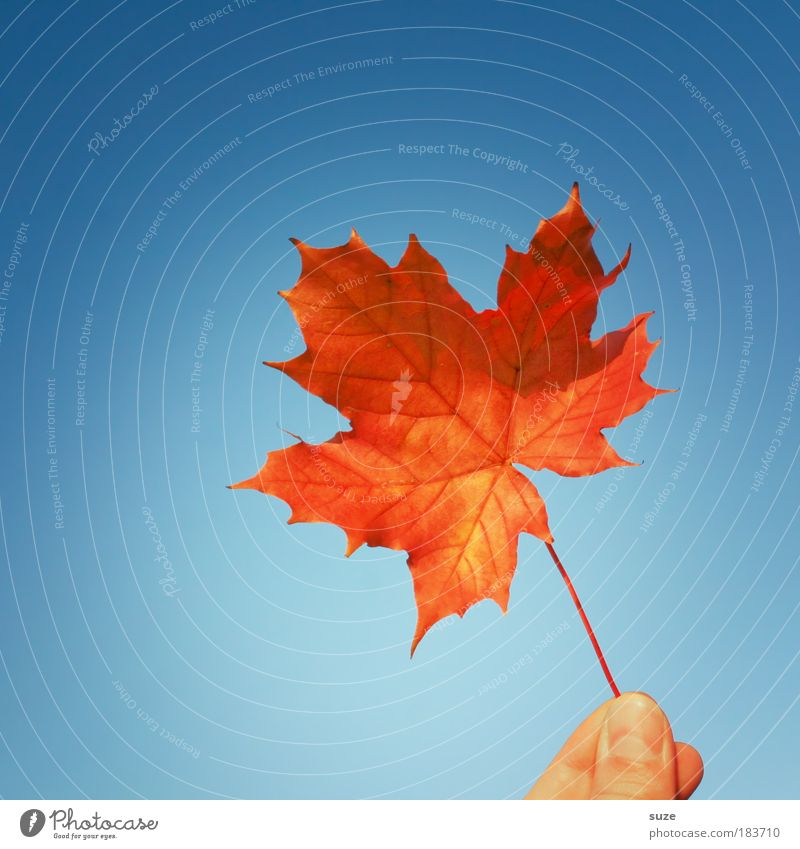 Sky Nature Blue Plant Hand Red Leaf Autumn Time Illuminate Esthetic Fingers Sign To hold on Seasons Colour photo