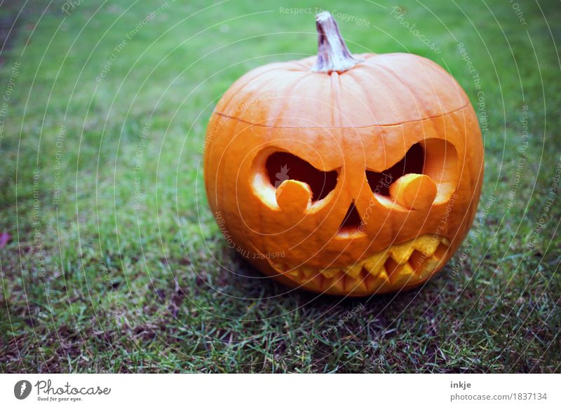 TRASH! pumpkin head Hallowe'en Autumn Threat Dark Creepy Anger Orange Fear Idea Creativity Tradition Pumpkin time Evil Graven Grimace Set of teeth Scare