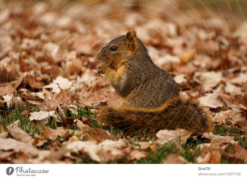 Green Leaf Animal Calm Forest Environment Cold Eating Autumn Meadow Grass Small Garden Brown Park Wild animal