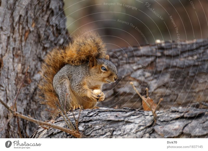 Could there be more than 600 nuts somewhere? Nutrition Eating Nature Autumn Tree Tree trunk Branch Twig Tree bark Acorn Garden Park Forest bouldering Colorado