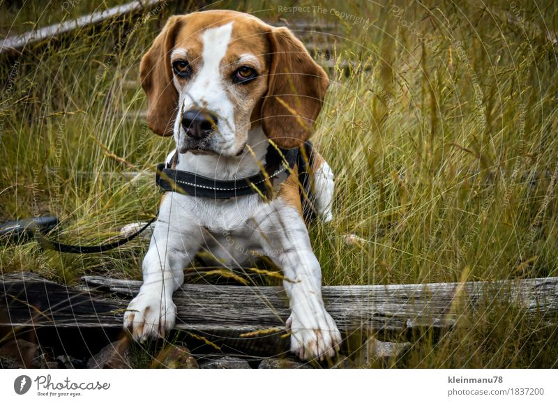 Dog Nature Plant Summer Sun Relaxation Animal Environment Meadow Autumn Natural Grass Wood Freedom Leisure and hobbies Weather