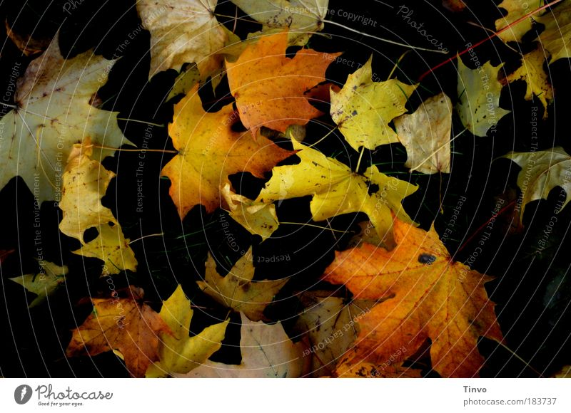 fall leaves Colour photo Exterior shot Day Contrast Low-key Autumn Leaf Multicoloured Uniqueness Transience Change Autumnal Fallen To fall Lie heap of leaves