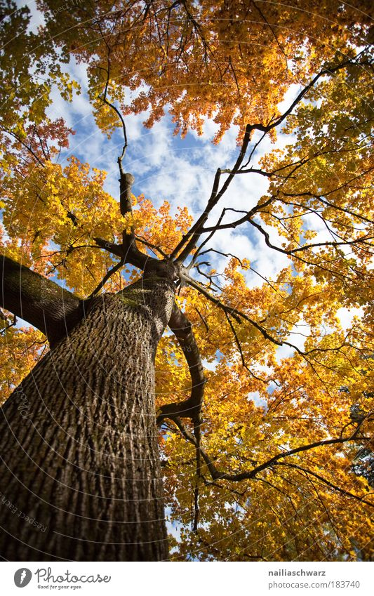 autumn colours Colour photo Multicoloured Exterior shot Structures and shapes Deserted Day Light Shadow Contrast Sunlight Worm's-eye view Environment Nature