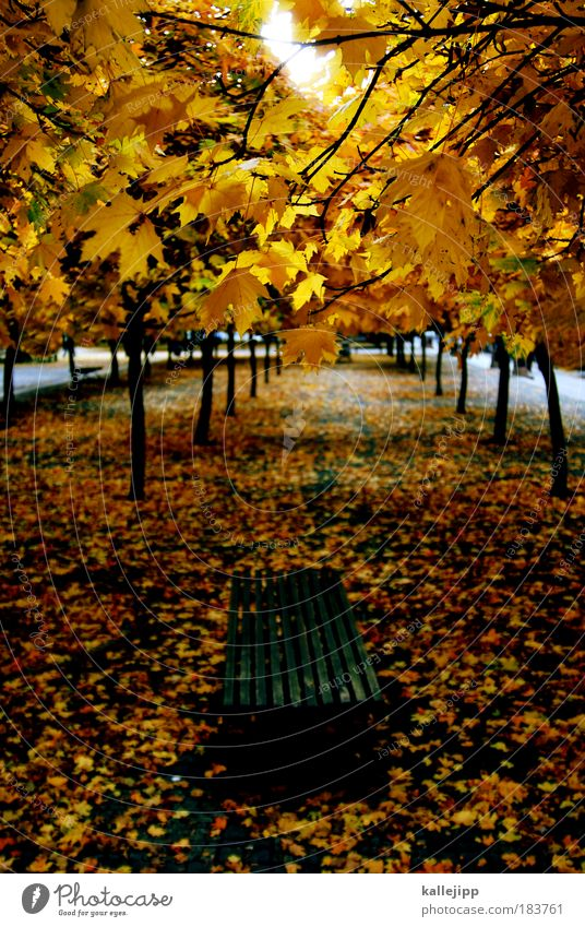 a walk in the park Colour photo Multicoloured Exterior shot Day Light Shadow Contrast Silhouette Bird's-eye view Environment Nature Landscape Autumn Climate