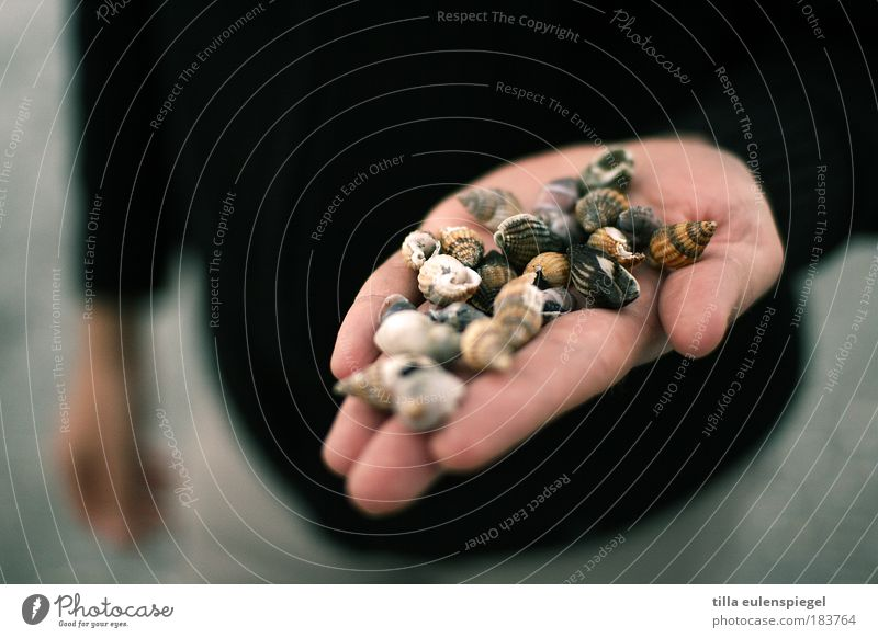 a handful ... Colour photo Exterior shot Copy Space left Copy Space top Neutral Background Evening Shallow depth of field Front view Relaxation Trip Beach