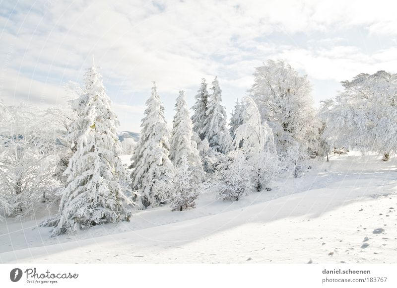 Vacation & Travel White Relaxation Winter Forest Cold Mountain Snow Bright Leisure and hobbies Ice Weather Frost Tree Fir tree Winter vacation