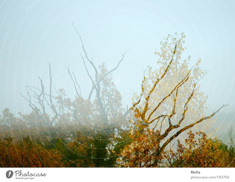 Nature Sky Tree Plant Calm Leaf Forest Life Autumn Dream Landscape Air Moody Environment Change Transience