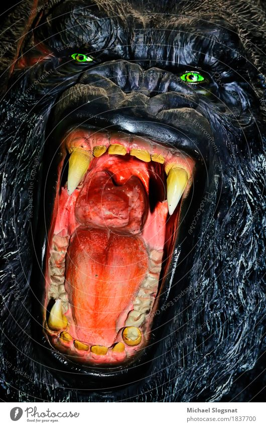 gorilla model Wild animal Animal face 1 Doll Plastic Aggression Exceptional Threat Dark Creepy Anger Black Emotions Bravery Self-confident Power Willpower Might
