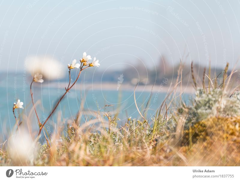 Island of Mön - Denmark - Baltic Sea Environment Nature Landscape Plant Earth Water Cloudless sky Horizon Sunlight Spring Beautiful weather Flower Blossom