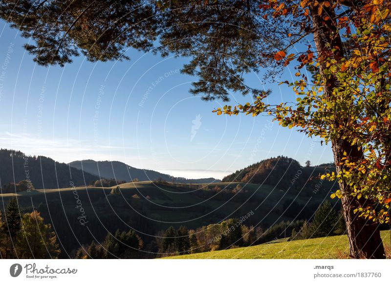 Nature Summer Beautiful Landscape Tree Relaxation Leaf Forest Autumn Meadow Moody Trip Branch Hill Cloudless sky