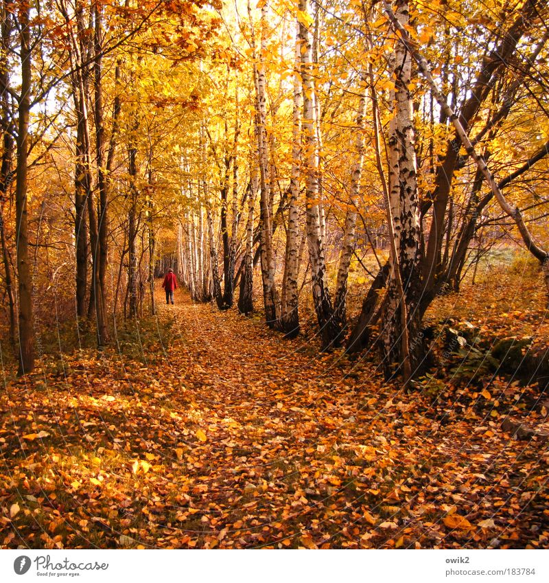 In the autumn Colour photo Multicoloured Exterior shot Copy Space bottom Day Light Shadow Contrast Sunlight Rear view Human being Woman Adults Partner 1 Nature