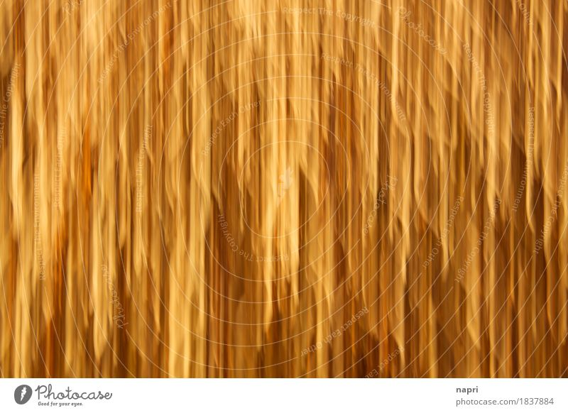 In the Lamettar Stupor II Design Party Inspiration Christmas & Advent Tinsel Gold Intoxication Decoration Feasts & Celebrations Vertical Background picture Line