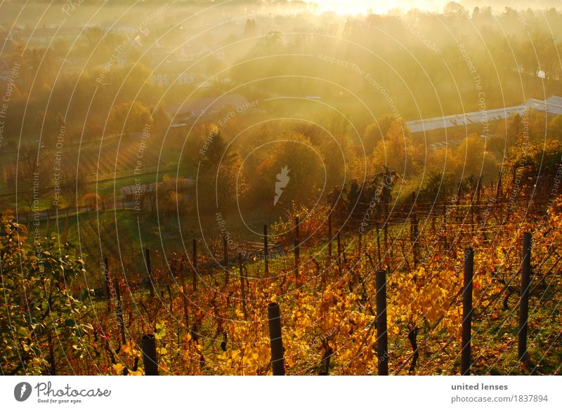 DR# Pillnitz III Art Esthetic Landscape Land Feature Vineyard Autumn Autumnal Autumn leaves Autumnal colours Early fall Autumnal weather Automn wood