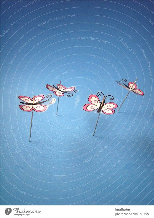 White Blue Black Animal Pink Point Butterfly Structures and shapes Bizarre Needle Impaled Unreliable