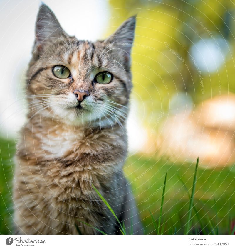 Again miaauuu Nature Summer Grass Garden Pet Cat 1 Animal Observe Sit Small Curiosity Cute Beautiful Brown Yellow Green Contentment Interest Experience