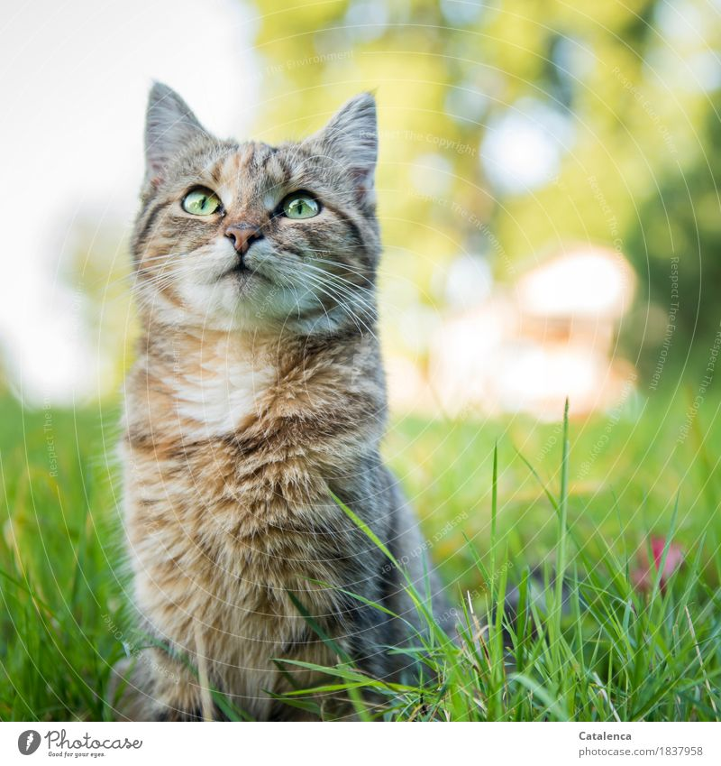 One last time miauuu Nature Plant Summer Beautiful weather Tree Grass Garden Pet Cat 1 Animal Observe Sit Curiosity Cute Brown Yellow Green Contentment Calm