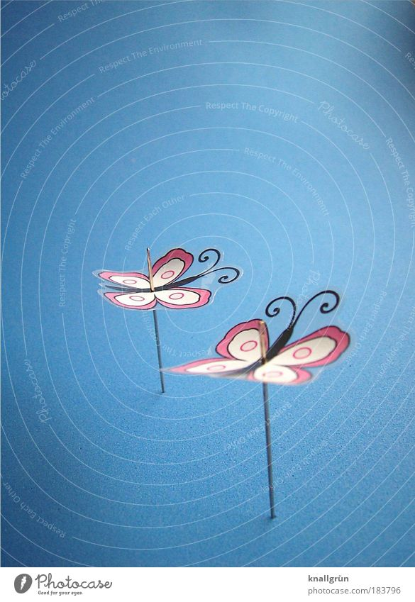 White Blue Black Animal Together Pink Light Point Emotions Butterfly Needle 2 Insect Impaled Unable to fly