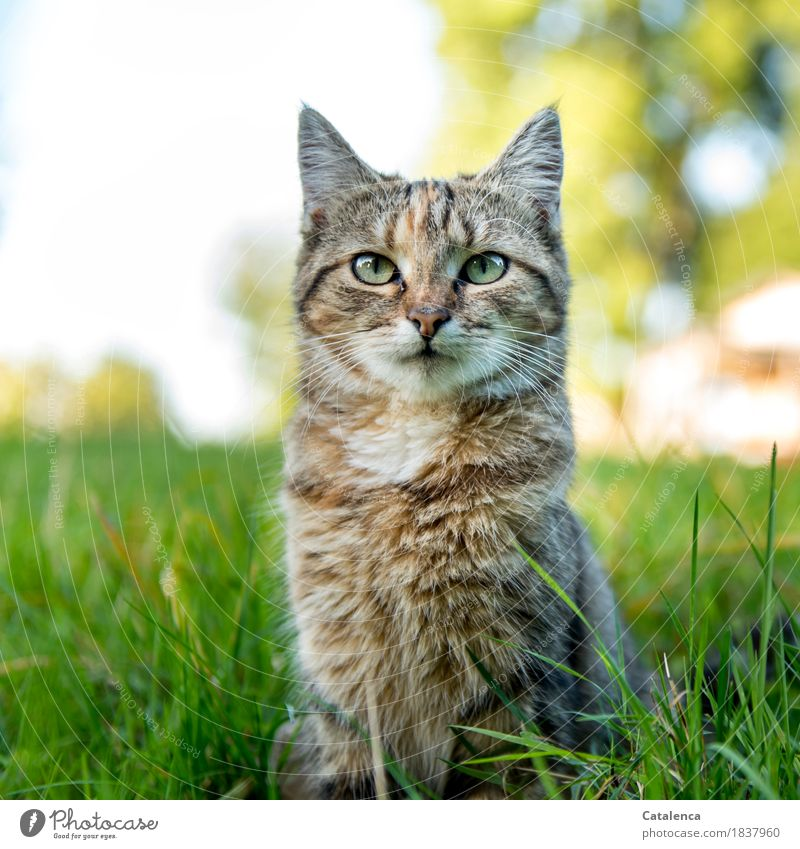 Miauuu Nature Plant Animal Summer Beautiful weather Tree Grass Garden Pet Cat 1 Observe Sit Cute Brown Yellow Green Turquoise White Watchfulness Curiosity