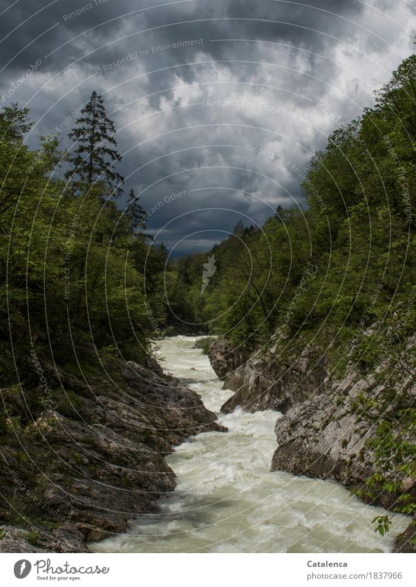 Turbulent times Freedom Summer Mountain Hiking Nature Landscape Water Storm clouds Climate change Bad weather Bushes Fir tree Alps River Movement Glittering