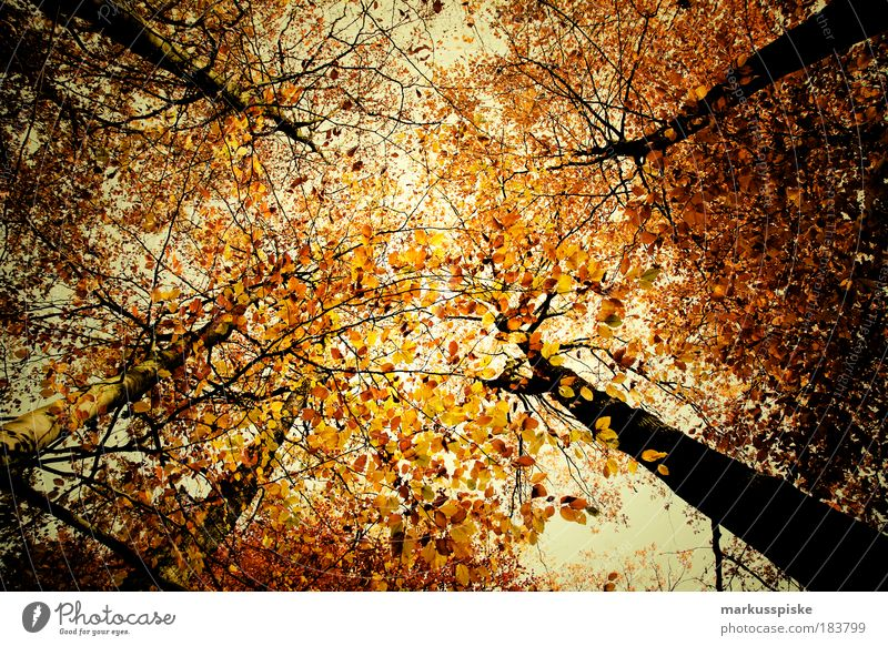 autumn forest Copy Space middle Environment Nature Landscape Plant Air Sky Clouds Autumn Climate Weather Beautiful weather Bad weather Tree Leaf Park Forest