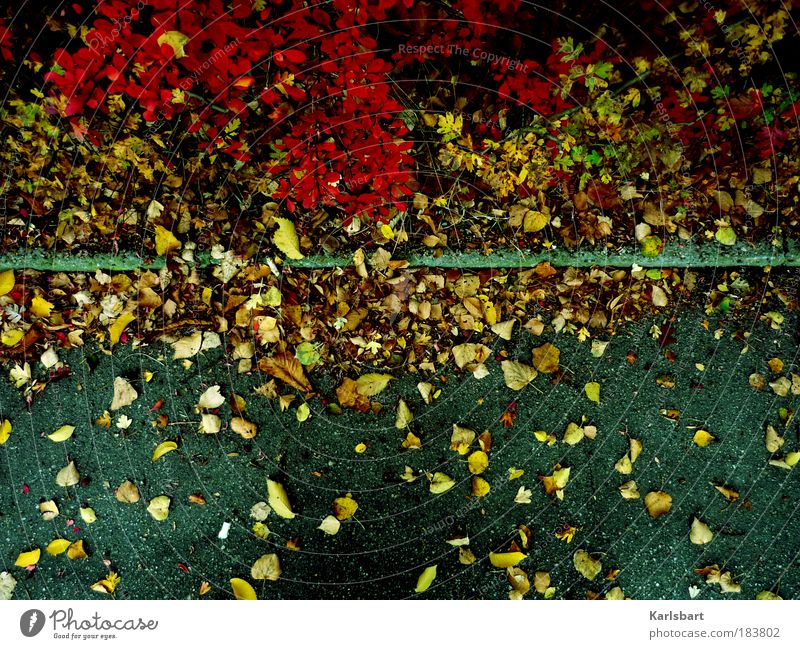 Nature Plant Leaf Street Life Autumn Lanes & trails Bushes Authentic Change Transience Traffic infrastructure Autumn leaves Curbside Autumnal Autumnal colours